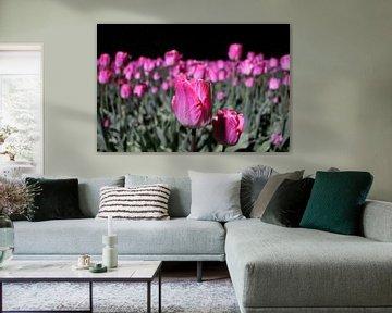 Roze tulpen bij nacht von Jacqueline Holman