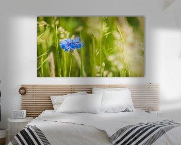 Blühender blauer Cornflower zwischen dem grünen Gras von Fotografiecor .nl