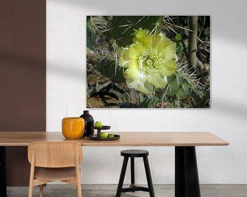 Cactus straalt von Silvia Weenink