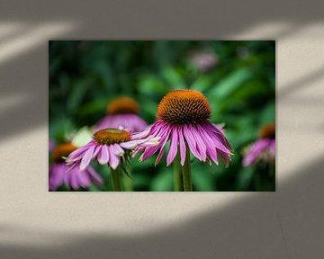 schöne lila Blume mit orangefarbenem Herzen von Patrick Verhoef