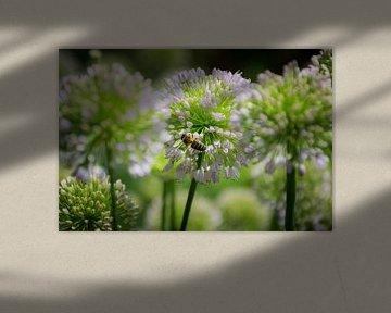 Biene auf einer Blume, weiches Foto von Patrick Verhoef