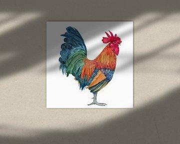Coq, aquarelle colorée d'un coq de Bantam sur Studio Heyki