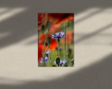 Korenbloem tussen klaproosjes von Yvonne van der Meij