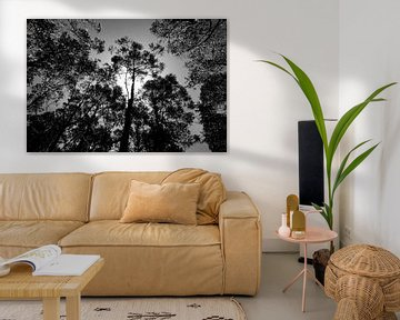 Zwart-wit foto van een bos in Madeira, Portugal. von Sander Wesdijk