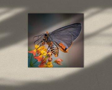 Schmetterling von Ingrid Ronde