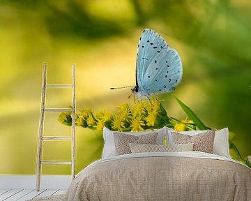 Yellow and blue ... van Henriëtte van Golde