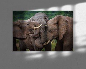 Elephant Hug van Guus Quaedvlieg