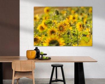 Zonnebloemen von John Kreukniet