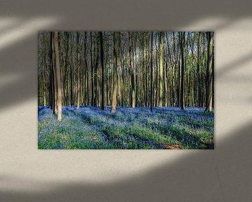 "Forest ""bluebells"""