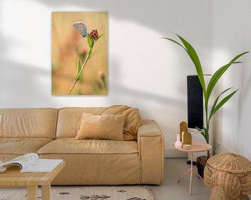 Icariusblauwtje Vlinder von Lisa Antoinette Photography