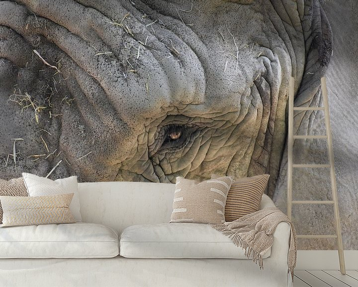 Sfeerimpressie behang: Olifant close up van Natascha Nabuurs