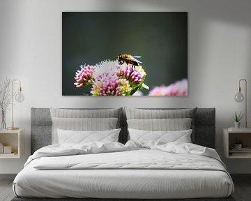 Bij op bloem verzameld honing von David van Coowijk