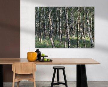 Berkenbomen sur Wouter Bos