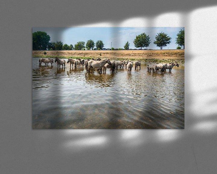 Sfeerimpressie: Konik Paarden in het water van Brian Morgan