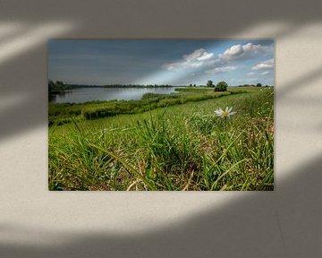 Bloeiend madeliefje op de rand van een Nederlandse dijk met een uitzicht van Fotografiecor .nl