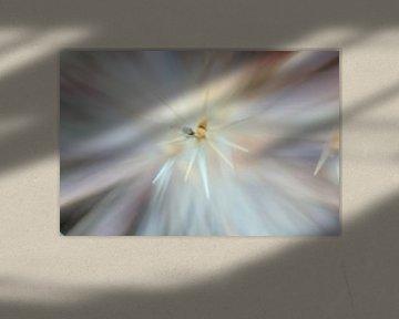Allium/Sierui macrofotografie bloemen