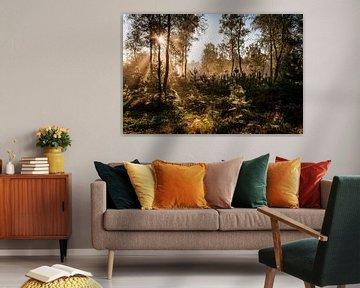 Zonnestralen in het bos sur MICHEL WETTSTEIN