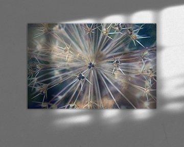 Allium/Sierui macro bloemen sur Watze D. de Haan