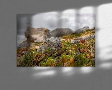 Little Rock von Vincent van den Hurk
