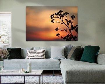 Schattenbild der Blume bei Sonnenuntergang von Cor de Hamer