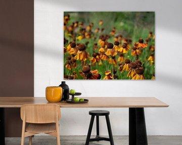 Gele zonnehoed, Echinacea von Margreet van Tricht
