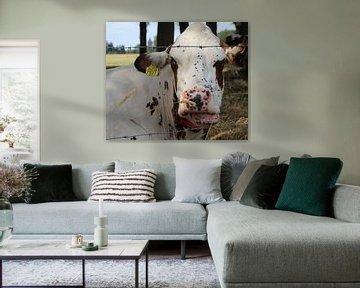 Koe in weiland van Lisette Hendrickx