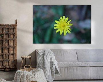 Gele bloem von Lisette Hendrickx