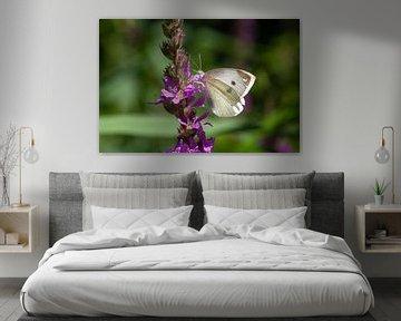 Schmetterling auf Blume von Nel Diepstraten