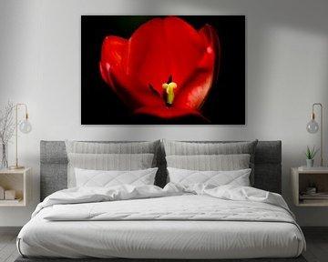 rode tulp von Frencis van Run