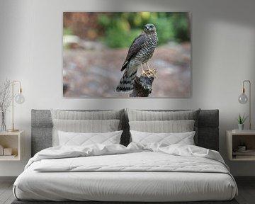 Sparrow sur Joop Lassooij