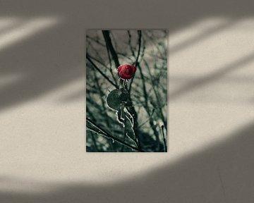 Bevroren roos von Een Vrouwsel