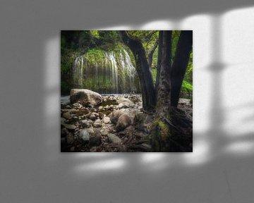 Het wenende bos van Joris Pannemans - Loris Photography