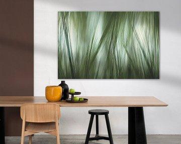 abstract gras van Arjen Roos