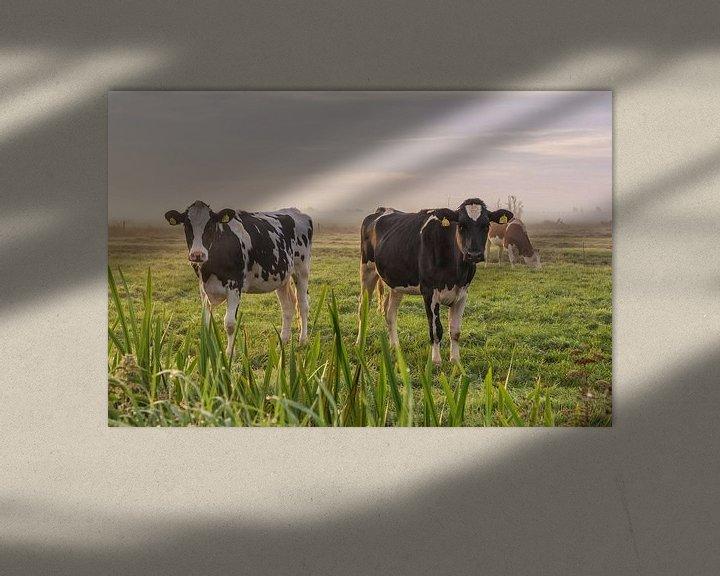 Sfeerimpressie: Jonge koeien in de ochtendmist van Yvonne van Driel