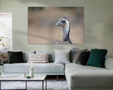gedetaileerde Emu ... von Pascal Engelbarts