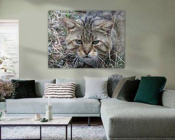 """""""wilde kat bekijkt z'n prooi"""" von Pascal Engelbarts"""