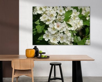 Flowerpower von Alise Zijlstra