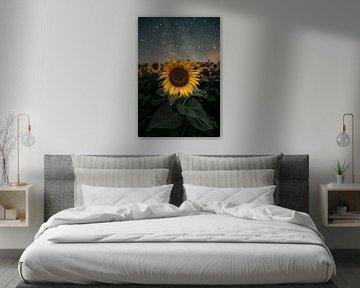 Sunflowers vs Milkyway