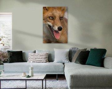 Portret vos von Yvonne van der Meij