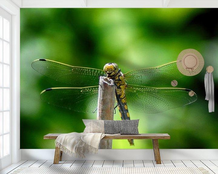 Sfeerimpressie behang: Libelle aan het zonnebaden van FotoGraaG Hanneke