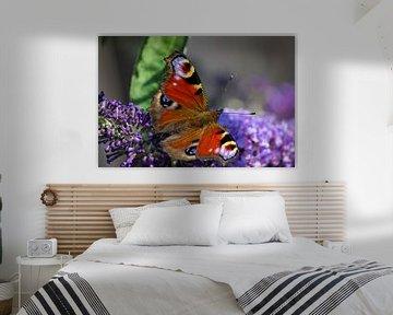Dagpauwoog vlinder von Patrick van Lent
