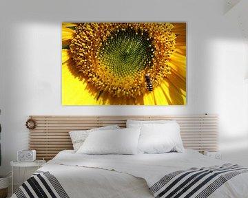 Zonnebloem von Patrick van Lent