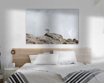 Paard op rotsen van Hannie Kassenaar
