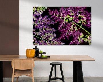 Herfstkleuren van Jolanta Mayerberg