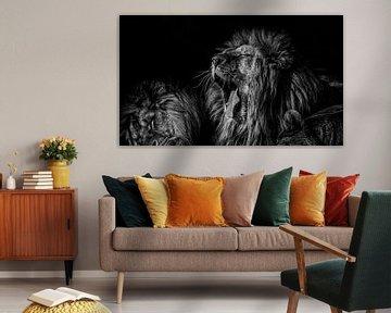 Der Löwe schläft heute Nacht. von Ron van Zoomeren