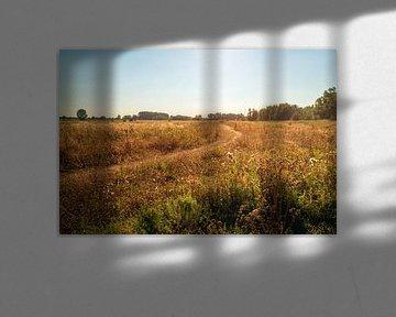 Schmale Wanderweg in einem trockenen niederländischen Naturschutzgebiet von Ruud Morijn