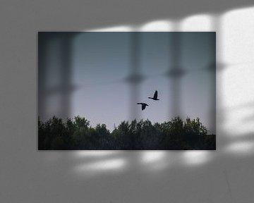 Twee ganzen vliegen in symmetrie von Dennis Kluytmans