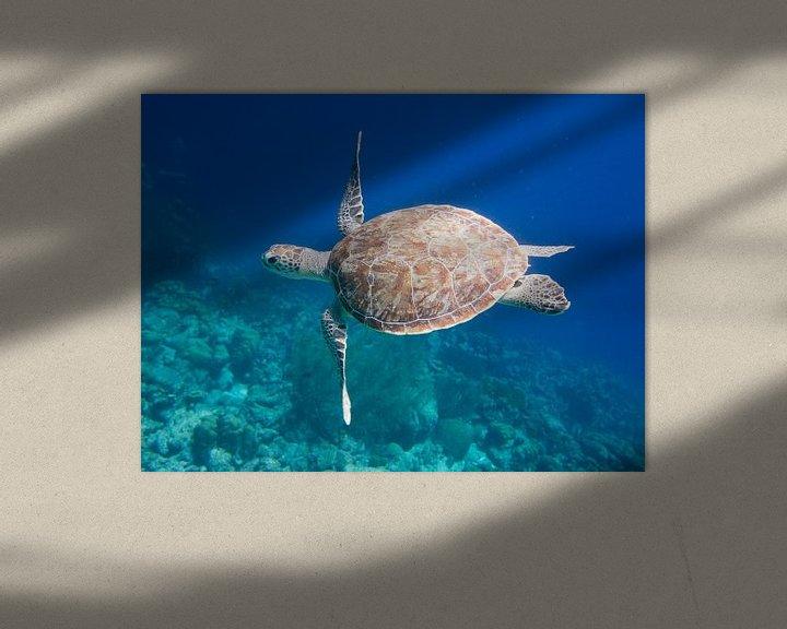 Sfeerimpressie: Zeeschildpad van Michael Rust