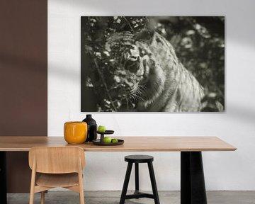 tijger von Remko van der Hoek- Zijdemans