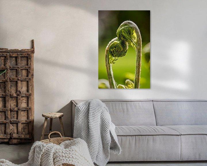 Sfeerimpressie: Young ferns in love van Frans Blok